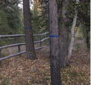 Marked trees