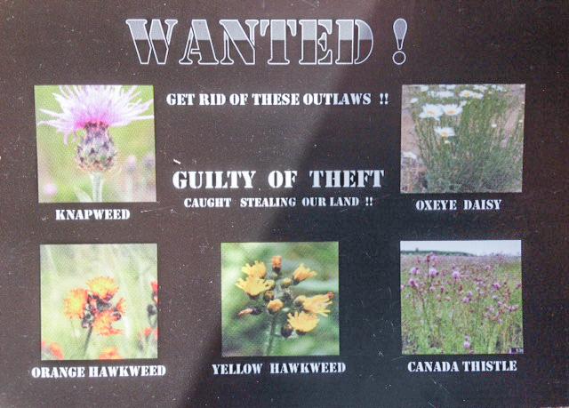 Noxious weed postcard