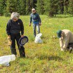 Donna, Debo, and Randy pulling knapweed