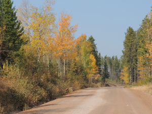 North Fork Road in Fall - USFS