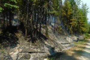 Hay Creek Fire burning up against Hay Creek Road west of Polebridge, July 26, 2021 - USFS